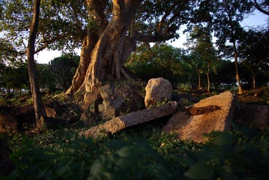 Tree Near Hippo Point Kisumu